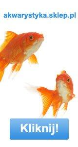 CO2 w akwarium: